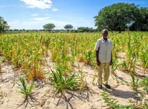 Pascalice with his millet crop that has been stunted by insufficient rain